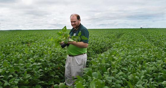 """Los Grobo: """"El negocio de multiplicar semilla es apostar a que se duplique el mercado de fiscalizada"""""""