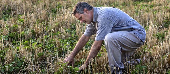 Se acabó el verso: ahora las variedades de soja se identificarán vía su ADN