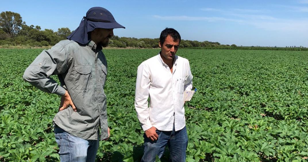 La israelí Evogene inscribe el primer cultivar de ricino en la Argentina