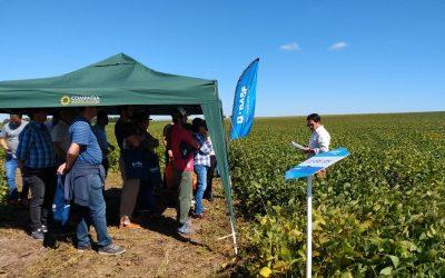 Lo vintage llega a la soja: renovado interés por los cultivares de hoja lanceolada