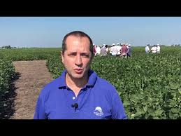 Argentina: Drought cuts between 25% to 30% of soybean yields