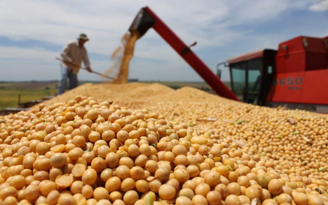 Liberaron la soja resistente a sequía y a glifosato