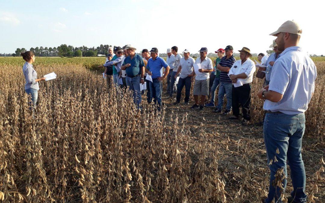 Santa Rosa Semillas prepara nuevas plataformas para su germoplasma de soja