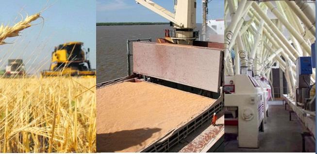 Con una producción de trigo en expansión, la industria molinera muestra indicadores negativos