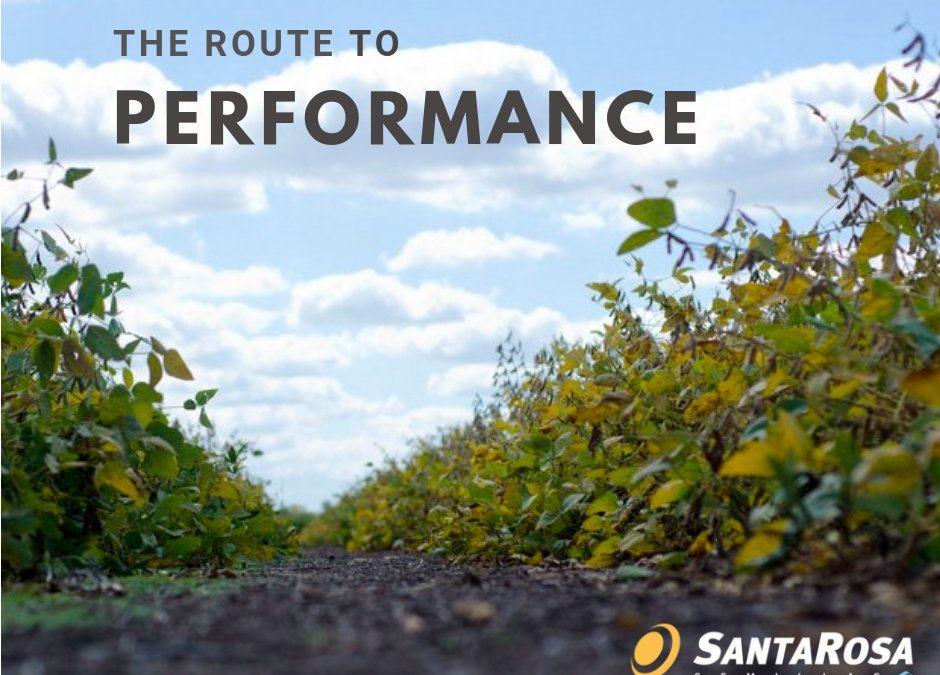 Genética de exportación: el semillero Santa Rosa lanza su filial sudafricana
