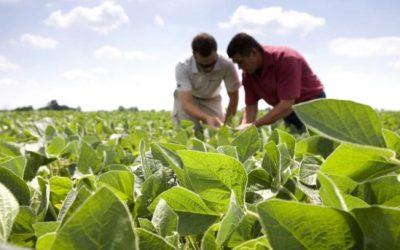 Monitoreo y tecnología, claves para combatir las plagas en soja
